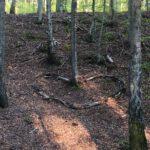 Drugie zdjęcie serca z gałęzi w lesie