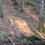 Serce ułożone z gałęzi w lesie