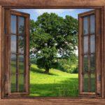 Okno na świat, ukazujące piękne stare zielone drzewo