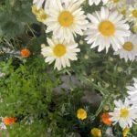 Kilka różnych kwiatków